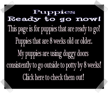 Ready for your puppy right now?